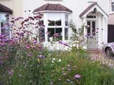Image result for small wildflower front garden
