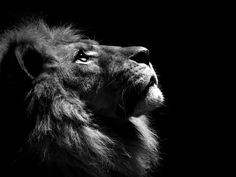 I love this, ever since watching the Chronicles of narnia with the boys I think of the Great Spirit aka god as a  Lion