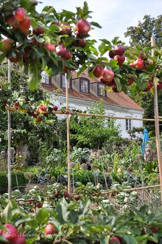 We have climbing fruit and vegetables in our castle veggie patch. Herb Garden, Vegetable Garden, Veggie Patch, Green Rooms, Medicinal Herbs, Edible Garden, Fruits And Vegetables, Container Gardening, Greenery