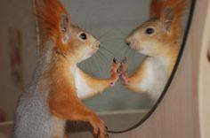 Espejito,espejito,dime si no soy la más hermosa de todas...