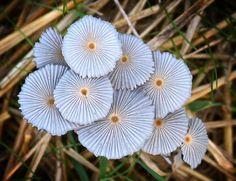 **flower-like mushrooms. Pretty! (not so weird on the grand mushroom weird-o-meter)