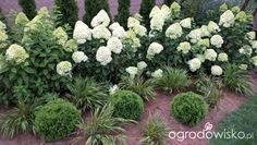 Ogródek Iwony II - strona 341 - Forum ogrodnicze - Ogrodowisko