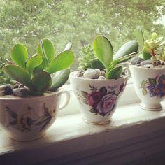Fox + Fern Succulent Tea Cups