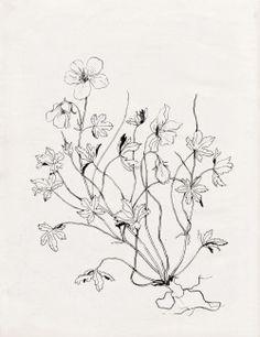 Nadezda Fava | GERANIO SELVATICO Sketch for a tattoo commission…