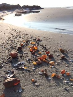 Baltic amber on the Falsterbonäset beach, Skåne, Sweden Are you kidding me? Baltic Sea, Baltic Amber, Kingdom Of Sweden, Sweden Travel, Am Meer, Amazing Nature, Stockholm, Places To See, The Good Place