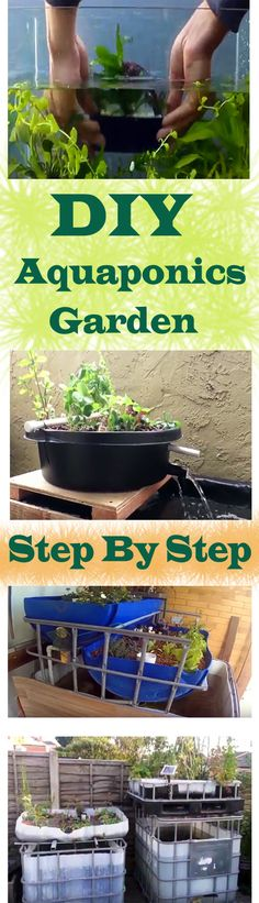 An aquaponics garden is the most environmentally friendly way to easily grow organic vegetables. Here are some guidelines to follow for building your own aquaponics system.