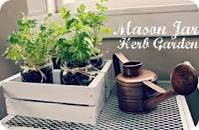 herb garden in mason jars