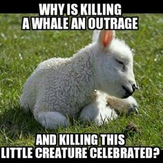 """Killing either/any """"should be"""" an outrage."""