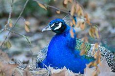 Portugal, Bird, Photography, Animals, Photograph, Animales, Animaux, Birds, Fotografie