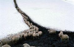 fotojournalismus:  Dmitry Gomberg:Akrak Vazha (The Shepherd's...