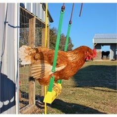 The Chicken Swing from My Pet Chicken...OMG hilarious, I can see my chickens on this now