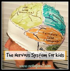 Nervous System for kids.  Want to make a study of the Nervous System more fun?  This blog post includes a variety of activities to engage kids in learning about the brain and the rest of the nervous system.