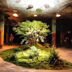 The Lowline exhibit opens to public for previews of the proposed underground park