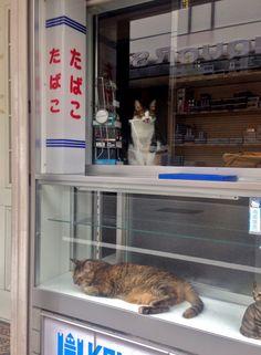 "Cat in the window "" Nakatsu, Osaka, Japan. """