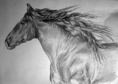 Horse drawing. My oil paintings for sale: https://www.etsy.com/shop/EletArt #drawings #sketching #horse #EletArtoilpaintings #animalart