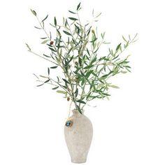 Olive tree branches in vase