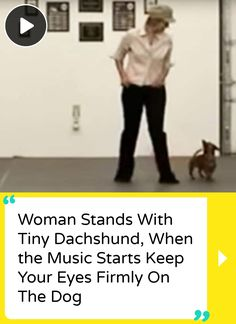 Woman Stands With Tiny Dachshund, When the Music Starts Keep Your Eyes Firmly On The Dog Dapple Dachshund, Funny Dachshund, Dachshund Puppies, Weenie Dogs, Dachshund Love, Funny Dogs, Bull Mastiff Puppies, Dachshund Quotes, Daschund