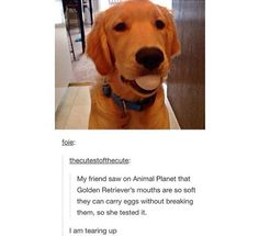 If I tried doing this to my dog she'd probably bite it and break it but it's adorable