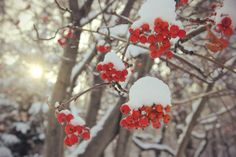 photo: winter beauty | photographer: Assem