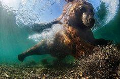 Широкоугольный объектив, победитель: «Подводный рыбак» - Михаил Коростелев (Россия)