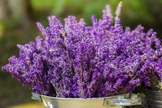 What to Do With Fresh Cut Lavender Flowers | eHow