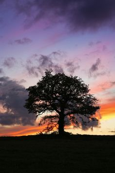Sunset - Single tree with fiery sunset behind. This tree is in a field oppos. Sunset – Single tree with fiery sunset behind. This tree is in a field opposite the entrance Beautiful Photos Of Nature, Beautiful Sunset, Nature Photos, Sky Quotes, Single Tree, Ocean Sunset, Tree Photography, Tree Silhouette, Nature Scenes