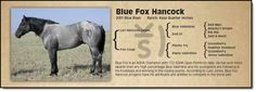 Blue Fox Hancock - His get are always my favorite picks in the Come to the Source Horse Sale
