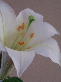 Gumpaste Lily by Robert Haynes