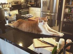 Say hello to my 31 pound cat Wellington. http://ift.tt/2ur2tvt