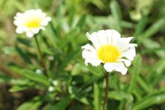 こころの庭の花たち(2014年8月)