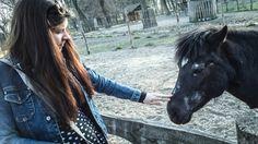 Horse  black stroking