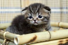 sad cat...cute