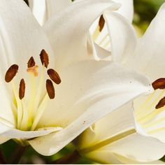 Flowers from the garden.  http://www.zazzle.com/xudexphotography?rf=238184182806581824  #nature #flower #photography #garden #macro