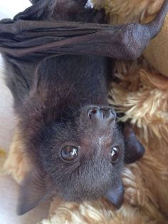 Bat in rehab...take a massage and spa welness ...will give you all the relaxation you needed