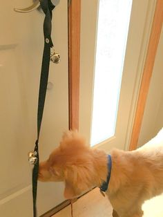 Puppy Housetraining Potty Bell Dog Bell Doorbell Fun Fast Effective Housebreaking Aid For Your Dog That Uses Positive Reinforcement Methods To House Train Your Pet For When They Need To Tinkle -- Read more at the image link. (This is an affiliate link) Puppy Potty Training Tips, Dog Training Pads, Training Your Dog, Stop Dog From Biting, Stop Dog Barking, House Breaking A Puppy, Foods Bad For Dogs, Dog Boarding Near Me, Puppy House