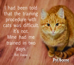 How long did it take your cat or cats to train you?