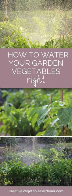 Summer can be hot and dry. Here's how to water your vegetable garden.