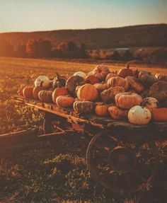 Pumpkin Leaves, Autumn Leaves, Autumn Cozy, Dark Autumn, Autumn Fall, Winter, Fall Wallpaper, Watch Wallpaper, Soft Wallpaper