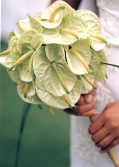 I didn't realize anthuriums came in white...  http://www.afloral.com/Silk-Wedding-Flowers/Tropicals/27-Large-Anthurium-in-Cream-White  $2.59 each
