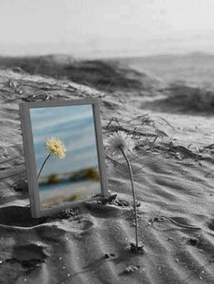 splash of color photography / at the beach / reflections of a flower