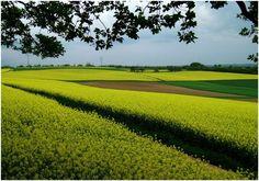 landschaftsmalerei-9b52fab2-0da5-4170-8e95-27422f3a9feb.jpg (870×611)