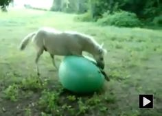 Horse Loves Playing with Ball...