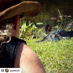 """I've been communicating with Jaye. Anyone who can help this guy suffering so much would be doing a major blessing.  #Repost @jayeeryk with @repostapp ・・・ I miss my life!  Dealing with severe illness, unable to work... I've lost everything over the past year.  This #throwbackthursday sees me volunteering with the non profit organization @evergladeswildlifealliance  I'm staring down this gator looking for the right opportunity to carefully set up my camera and do  some shooting. (No…"