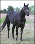 Holy Bart(2002)Dash Ta Fame- High On Coaly By On A High. 3x3 To Dash For Cash, 5x5 To Jet Deck, 5x5x5 To Rocket Bar(TB). 35 Starts 16 Wins 6 Seconds 4 Thirds. $22,904. Won Phoenix Gold Cup(Twice).