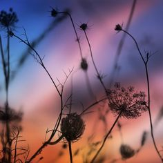 #landscape #landscapelovers #sky #nature #naturelovers #nationalgeographic #sunset #sunrise #sunshine #silhouette #silhouettes #flowers #grasses #floral #garden #wind #spring #springbreak #plants