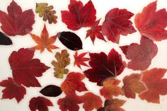Autumn leaf magnets fall diy crafts diy crafts do it yourself fall crafts fall projects leaf crafts fall craft projects leaf magnets