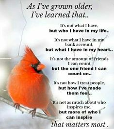 Super ideas for quotes short life bible verses True Quotes, Great Quotes, Quotes To Live By, Funny Quotes, Motivational Quotes, Daily Quotes, Bird Quotes, Lessons Learned In Life, Life Lessons