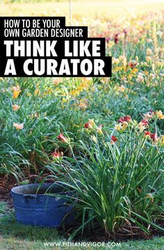 How to be your own garden designer - think like a curator