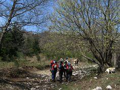 Riscoprire la foresta di Roccarainola, escursione ecologica promossa da Legambiente Nola