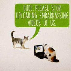 I will probably think of this every time I see a cat video now ha